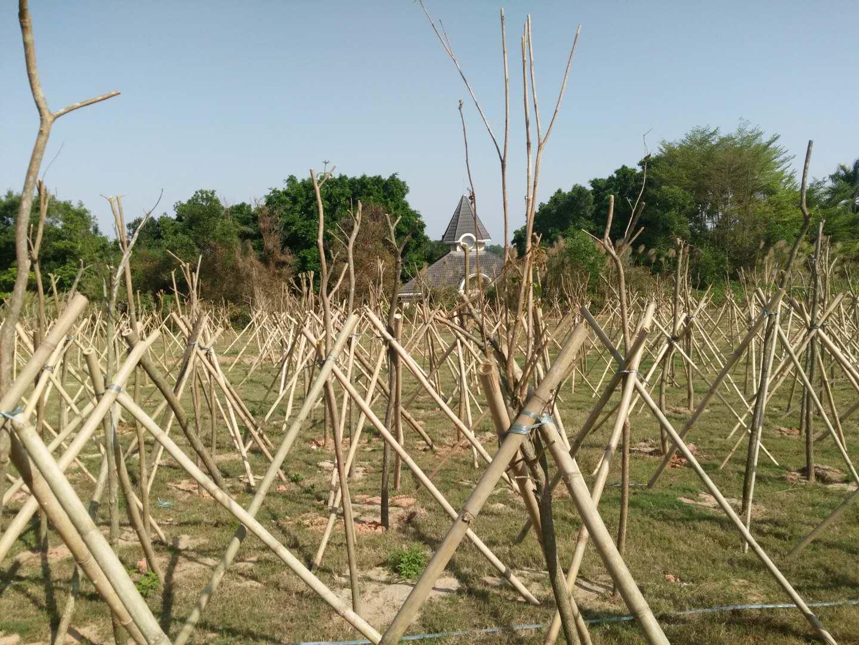 航城植树造林