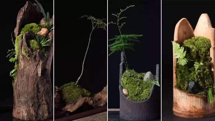 苔藓,上帝遗失的一抹绿色