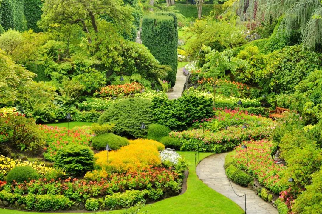 荫生花境植物配置